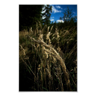 Grass seeds in the wind poster