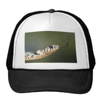 Grass Snake Cap