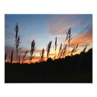 Grass Standing Tall – Early Morning Sunrise Photo Print