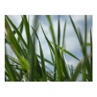 Grass world postcard