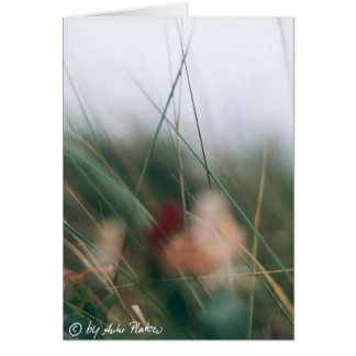 grasses card