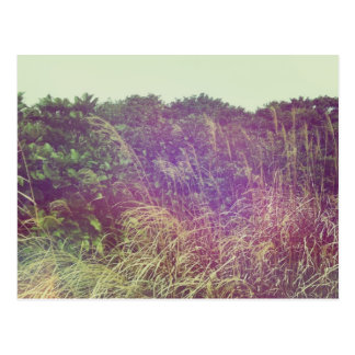 Grasses in the Wind Postcard