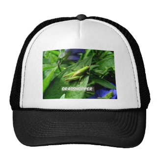 Grasshopper on leaf cap