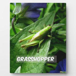 Grasshopper on leaf plaque