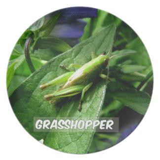Grasshopper on leaf plate