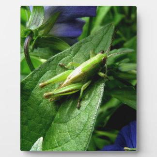 Grasshopper Plaque