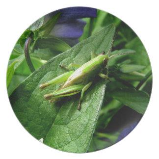 Grasshopper Plate