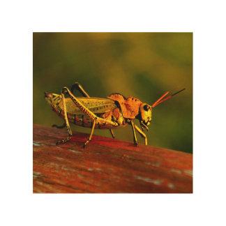Grasshopper Wooden Photo Wood Print
