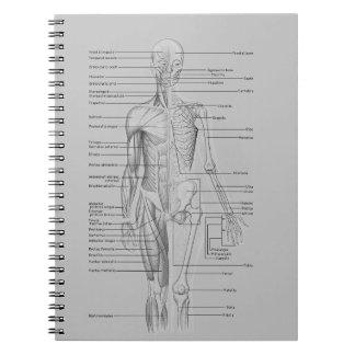Gray Anatomy Notebooks