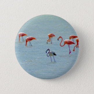 Gray and pink flamingos flock in lake 6 cm round badge
