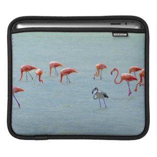 Gray and pink flamingos flock in lake iPad sleeve