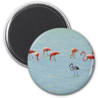 Gray and pink flamingos flock in lake magnet