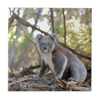 Gray and White Koala Bear Ceramic Tile