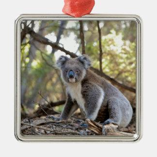 Gray and White Koala Bear Metal Ornament