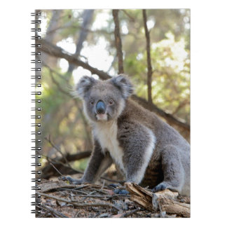 Gray and White Koala Bear Notebooks