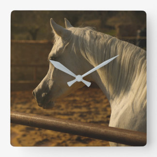 Gray Arabian Horse Square Wall Clock