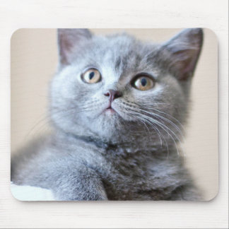 Gray British Shorthair Cat Mouse Pad
