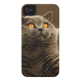 Gray Cat BlackBerry Bold Case