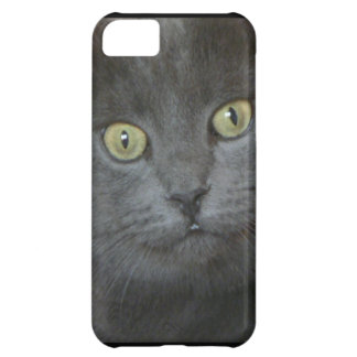 Gray Cat Cover For iPhone 5C