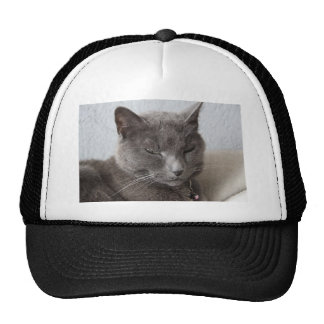 Gray cat trucker hats