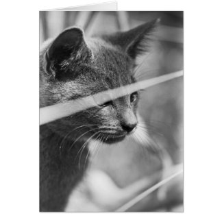 Gray Cat in the Grass Greeting Card
