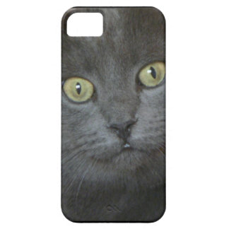 Gray Cat iPhone 5 Cases