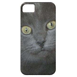 Gray Cat iPhone 5 Cases