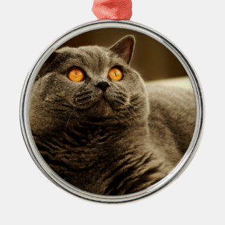 Gray Cat Premium Ornament