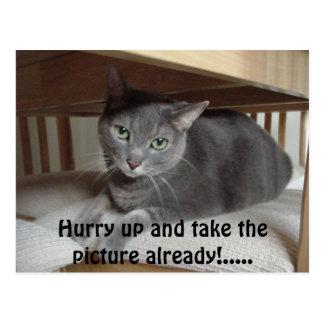 Gray Cat/Russian Blue Postcard
