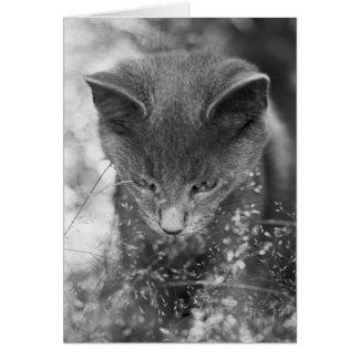 Gray Cat Stalking Greeting Card