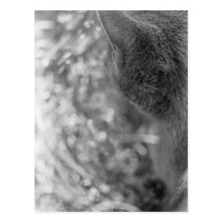 Gray Cat Watching Postcard