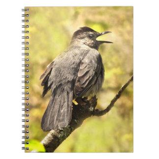 Gray Catbird Singing His Song Notebook