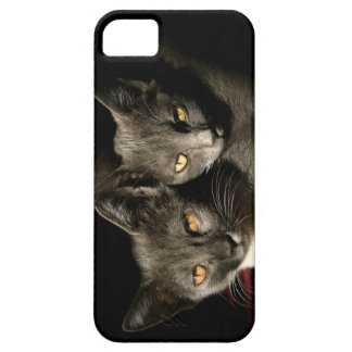 Gray Cats Photo iPhone SE + iPhone 5/5S Case