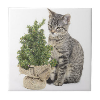 Gray Kitty Green Tree Small Square Tile