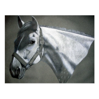 Gray on Grey Equine Art Postcard