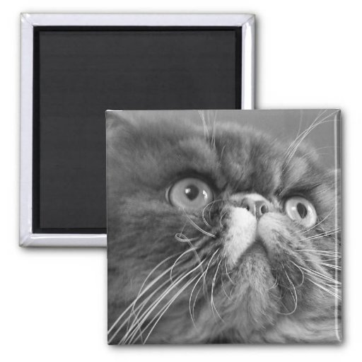 gray scale persian square magnet