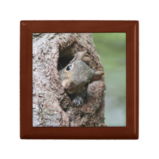 Gray Squirrel Gift Box