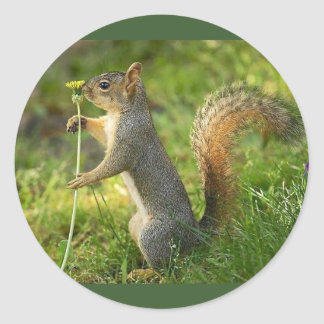 Gray Squirrel Holding A Small Dandelion Classic Round Sticker