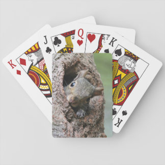Gray Squirrel Playing Cards