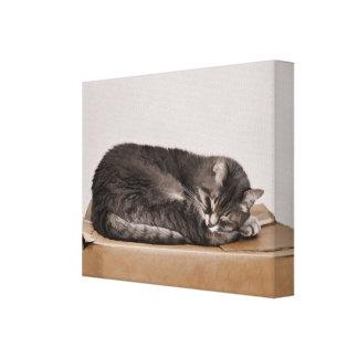 Gray Tabby Cat Sleeping On Box Canvas Print