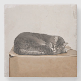 Gray Tabby Cat Sleeping On Box Stone Coaster