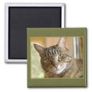 Gray Tabby Close Up Photograph Square Magnet