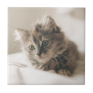 Gray Tabby Kitten Ceramic Tile