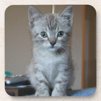 Gray Tabby kitten Coasters
