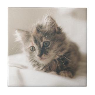 Gray Tabby Kitten Small Square Tile