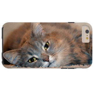 Gray, Tan, White Long-Haired Cat by Shirley Taylor Tough iPhone 6 Plus Case