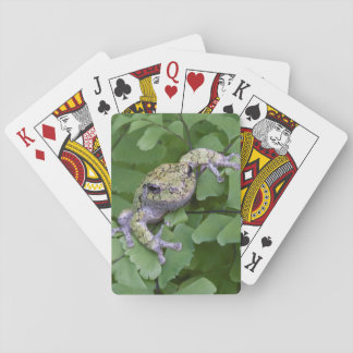 Gray tree frog on fern, Canada Poker Deck