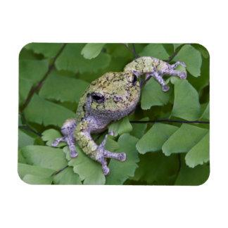 Gray tree frog on fern, Canada Rectangular Photo Magnet