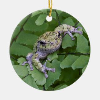 Gray tree frog on fern, Canada Round Ceramic Decoration