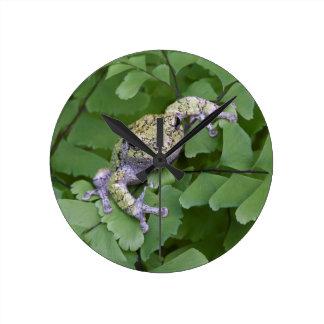 Gray tree frog on fern, Canada Round Clock